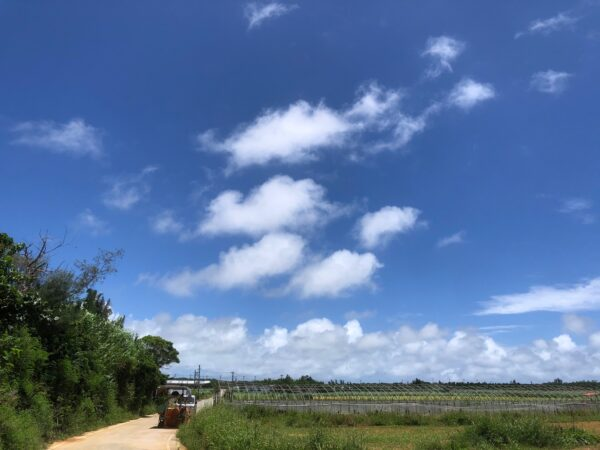 夏至南風!梅雨明け!