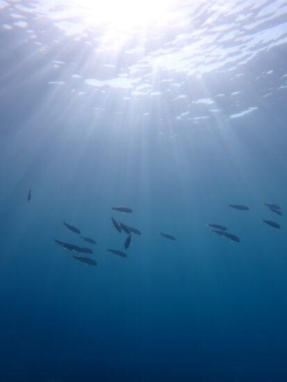 6月20日 宮古島!体験ダイビング日記!